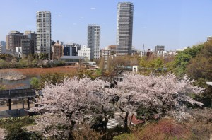 会場からの桜